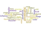 Hyssop  Word Cloud